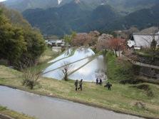 4月8日三多気の桜ウォーク